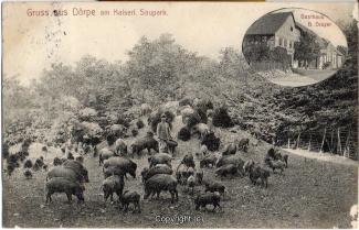 0028A-Doerpe127-Wildschweine-1912-Scan-Vorderseite.jpg