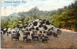 0071A-Doerpe125-Wildschweine-1913-Scan-Vorderseite.jpg