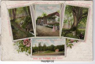 0080A-Osterwald260-Multibilder-Fichtenwirt-1904-Scan-Vorderseite.jpg