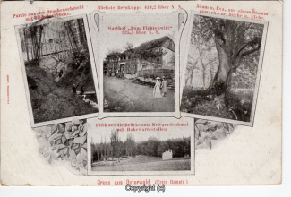 0085A-Osterwald261-Multibilder-Fichtenwirt-1906-Scan-Vorderseite.jpg