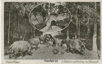 0158A-Coppenbruegge217-Wildschweinfuetterung-1944-Scan-Vorderseite.jpg