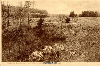 0280A-Sennhuette130-Kuhle-mit-Kuehe-1926-Scan-Vorderseite.jpg