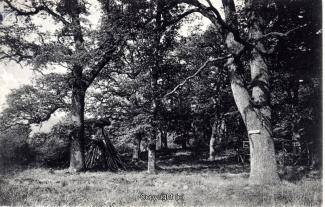 2010A-Ith090-Stieghagen-1913-Scan-Vorderseite.jpg