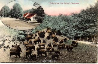 1210A-Holzmuehle261-Multibilder-Wildschweine-1910-Scan-Vorderseite.jpg