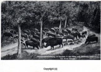 1220A-Holzmuehle263-Wildschweine-1933-Scan-Vorderseite.jpg