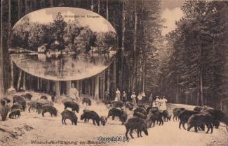 1230A-Holzmuehle197-Multibilder-Wildschweinfuetterung-1919-Scan-Vorderseite.jpg