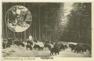 1240A-Holzmuehle247-Multibilder-Wildschweine-1901-Scan-Vorderseite.jpg