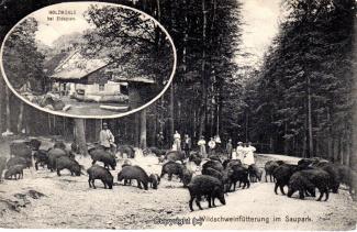 1260A-Holzmuehle264-Multibilder-Wildschweine-1915-Scan-Vorderseite.jpg