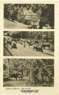 2610A-Holzmuehle130-Multibilder-1936-Scan-Vorderseite.jpg