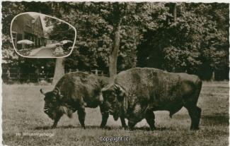 5010A-Holzmuehle165-Multibilder1959-Scan-Vorderseite.jpg