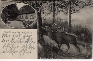 8210A-Springe433-Multibilder-Coellnischfeld-Hirsch-1918-Scan-Vorderseite.jpg