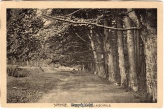 8730A-Springe450-Coellnischfeld-Weg-nach-1921-Scan-Vorderseite.jpg