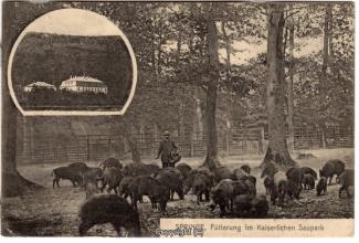 0840A-Saupark222-Multibilder-Schloss-Wildschweine-1910-Scan-Vorderseite.jpg