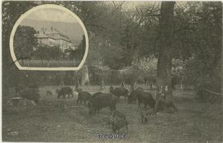 0860A-Saupark143-Jagdschloss-Multibilder-1913-Scan-Vorderseite.jpg