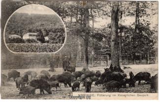 0860A-Saupark223-Multibilder-Schloss-Wildschweine-1909-Scan-Vorderseite.jpg