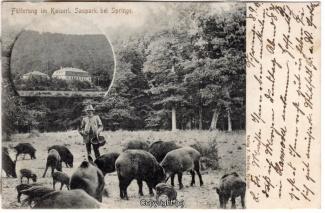 0880A-Saupark226-Multibilder-Schloss-Wildschweine-1902-Scan-Vorderseite.jpg