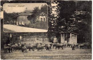 2200A-Saupark251-Multibilder-Eispfad-Wildschweine-1908-Scan-Vorderseite.jpg