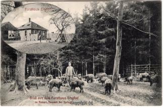 2220A-Saupark253-Multibilder-Eispfad-Wildschweine-1907-Scan-Vorderseite.jpg
