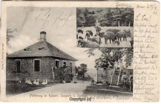 2235A-Saupark254-Multibilder-Eispfad-Wildschweine-1902-Scan-Vorderseite.jpg