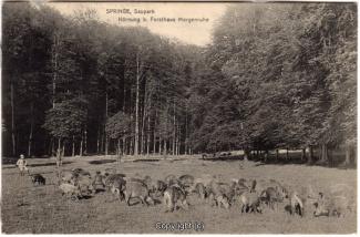 2250A-Saupark257-Morgenruhe-Wildschweine-1910-Scan-Vorderseite.jpg