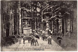2310A-Saupark261-Morgenruhe-Wildschweine-1916-Scan-Vorderseite.jpg