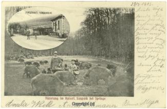2320A-Saupark135-Multibilder-1903-Scan-Vorderseite.jpg