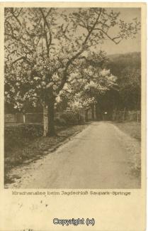 2730A-Saupark132-Kirschbluete-1927-Scan-Vorderseite.jpg