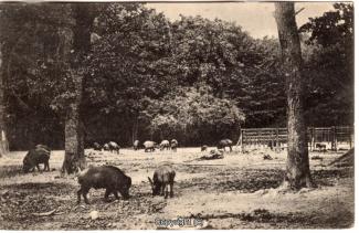4050A-Saupark286-Wildschweine-Scan-Vorderseite.jpg