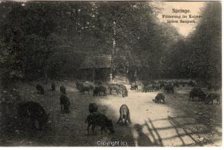 4070A-Saupark288-Wildschweine-Scan-Vorderseite.jpg