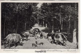 4080A-Saupark289-Wildschweine-1932-Scan-Vorderseite.jpg