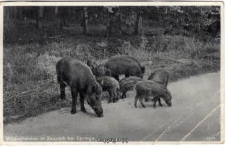 4100A-Saupark292-Wildschweine-Scan-Vorderseite.jpg