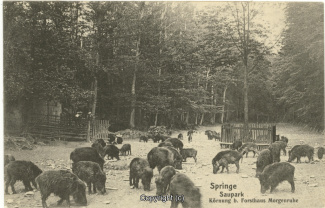 4110A-Saupark148-Wildschweine-1907-Scan-Vorderseite.jpg