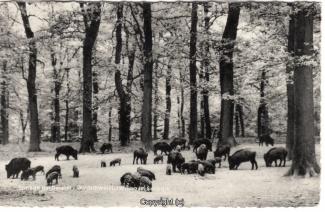 4130A-Saupark294-Wildschweine-Scan-Vorderseite.jpg