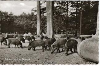 4240A-Saupark295-Wildschweine-1963-Scan-Vorderseite.jpg