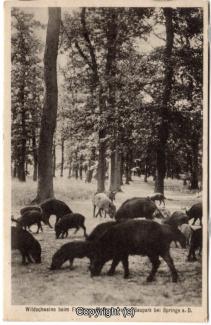 4260A-Saupark297-Wildschweine-1935-Scan-Vorderseite.jpg