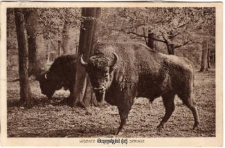4460A-Saupark303-Wisente-1931-Scan-Vorderseite.jpg