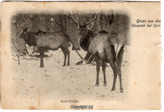 4720A-Saupark319-Hirsche-1907-Scan-Vorderseite.jpg
