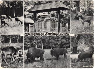 6140A-Saupark328-Multibilder-Wisentgehege-1964-Scan-Vorderseite.jpg