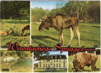 6320A-Saupark334-Multibilder-Wisentgehege-Scan-Vorderseite.jpg
