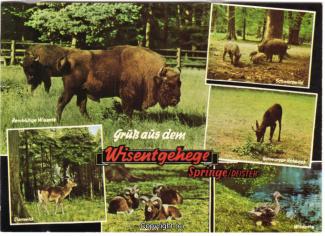 6330A-Saupark333-Multibilder-Wisentgehege-1971-Scan-Vorderseite.jpg