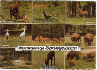 6350A-Saupark336-Multibilder-Wisentgehege-1965-Scan-Vorderseite.jpg