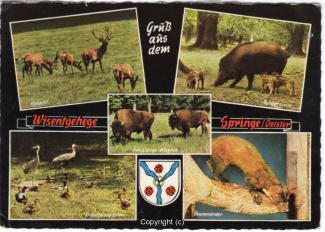 6360A-Saupark338-Multibilder-Wisentgehege-1975-Scan-Vorderseite.jpg