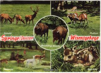 6370A-Saupark339-Multibilder-Wisentgehege-1971-Scan-Vorderseite.jpg