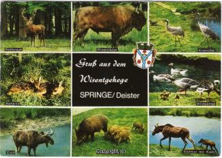 6390A-Saupark342-Multibilder-Wisentgehege-Scan-Vorderseite.jpg