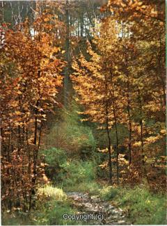 6650A-Hameln2019-Weg-zum-Kluet-Scan-Vorderseite.jpg