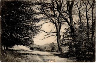 1530A-Deister031-Waldweg-Scan-Vorderseite.jpg